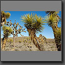 california deserts photos