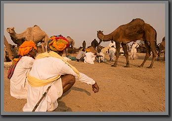 Camels Traders 2 India
